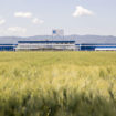 ISA-factory crop